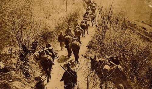Les animaux dans la grande guerre