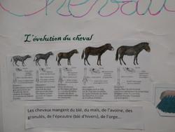 Exposé sur les chevaux.