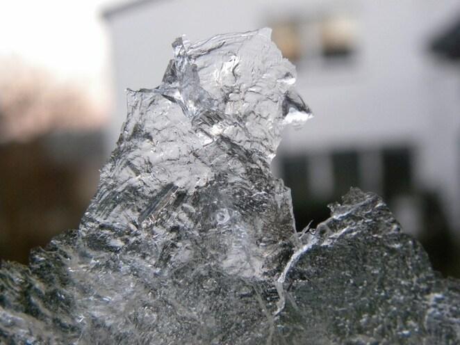 Un oiseau de glace