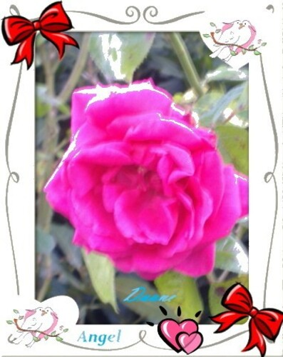 Au-Coeur-Rose-AD.JPG