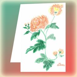 Carte postale n°115 : Chrysanthèmes