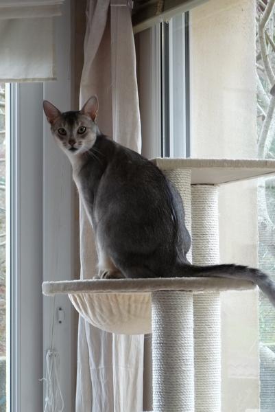 Arbre à chats (suite) :