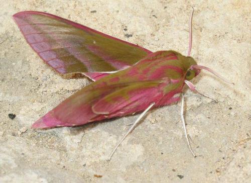 Insectes : papillons et chenilles