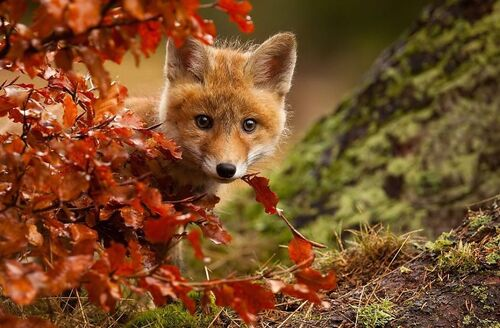 Autumn animals