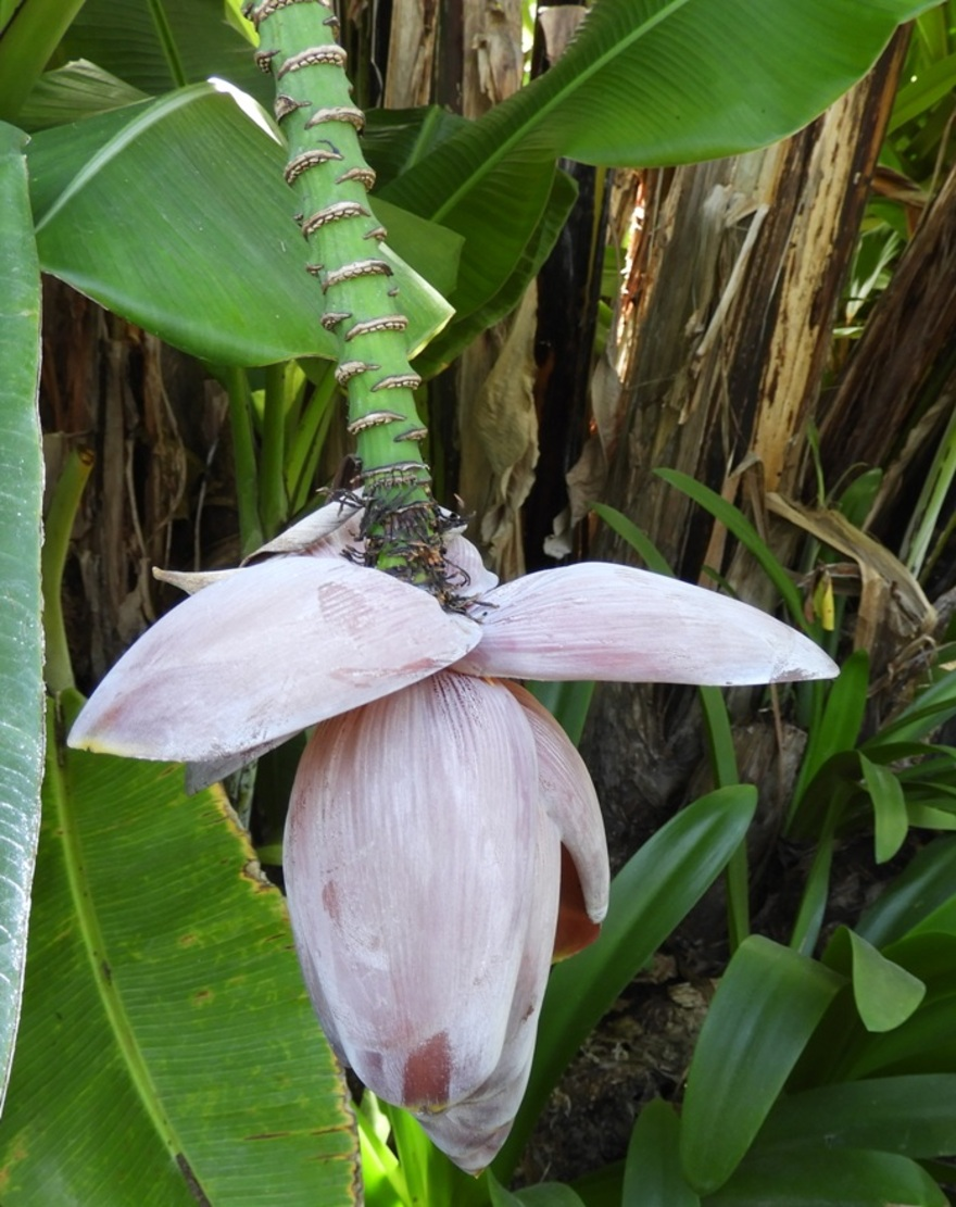 Île Maurice : SOFITEL BEL OMBRE 1/3 -