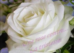 Une rose (pps)