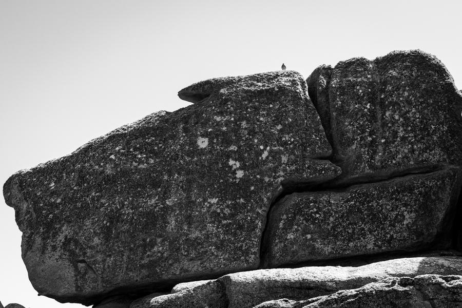 Goéland sur son rocher