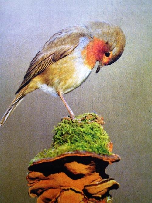 L'oiseau fait son festival