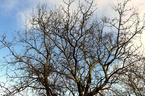 Branches et nuages