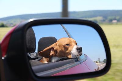 Blog de dyane : Traces de Vie, Sa première sortie en cabriolet...