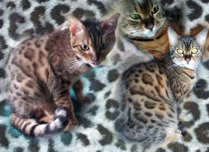 OrnellaGladys8295753-bw-leopard-peau-arriere-plan-ou-la-texture-grande-resolution