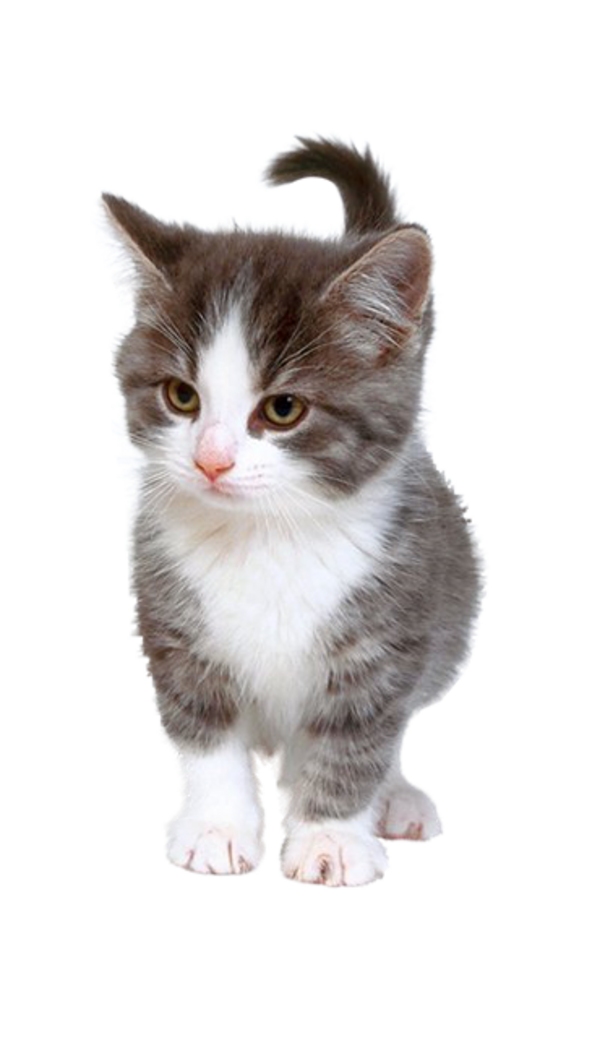 Animaux, Chats, chatons