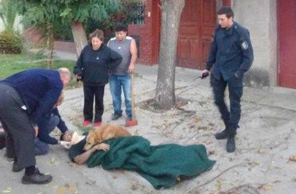 Ce chien refusait de quitter son maître blessé