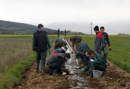 Les élèves du lycée agro – environnemental St Joseph réhabilitent les haies bocagères.