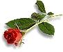 fleurs_133.gif