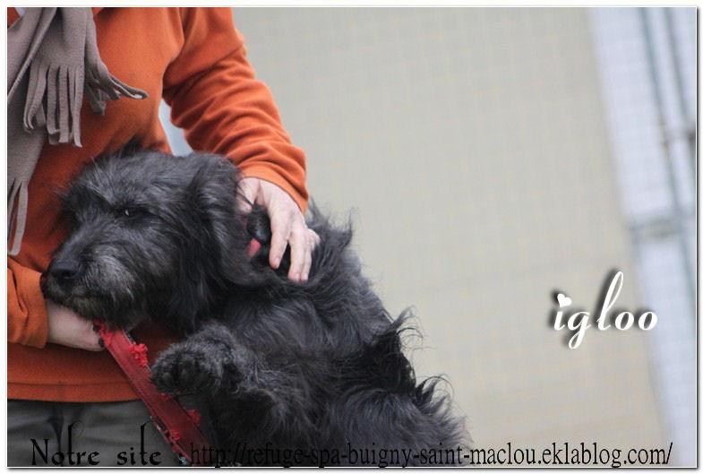 Igloo - nouvelles photos