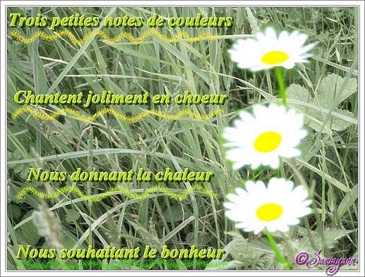 Carte Nature Paquerettes Passion Des Fleurs