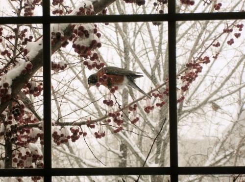 - neige diverses images