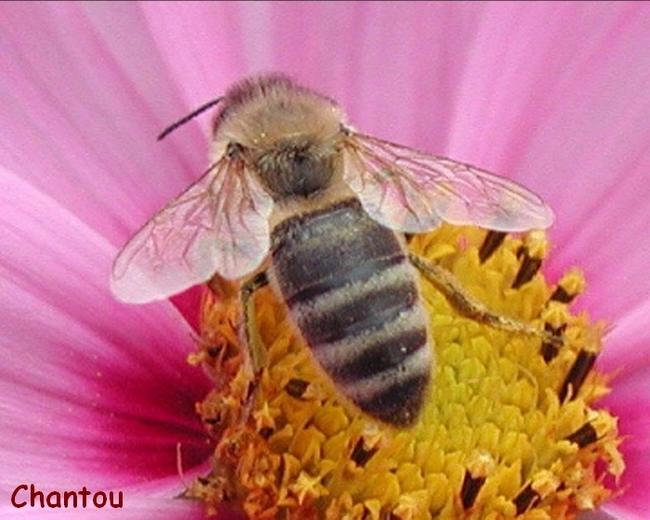 Disparition des abeilles - 15e législature