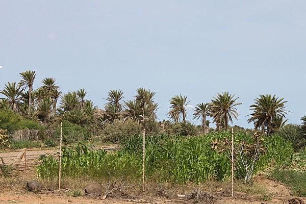 boa vista, l'est de l'île2