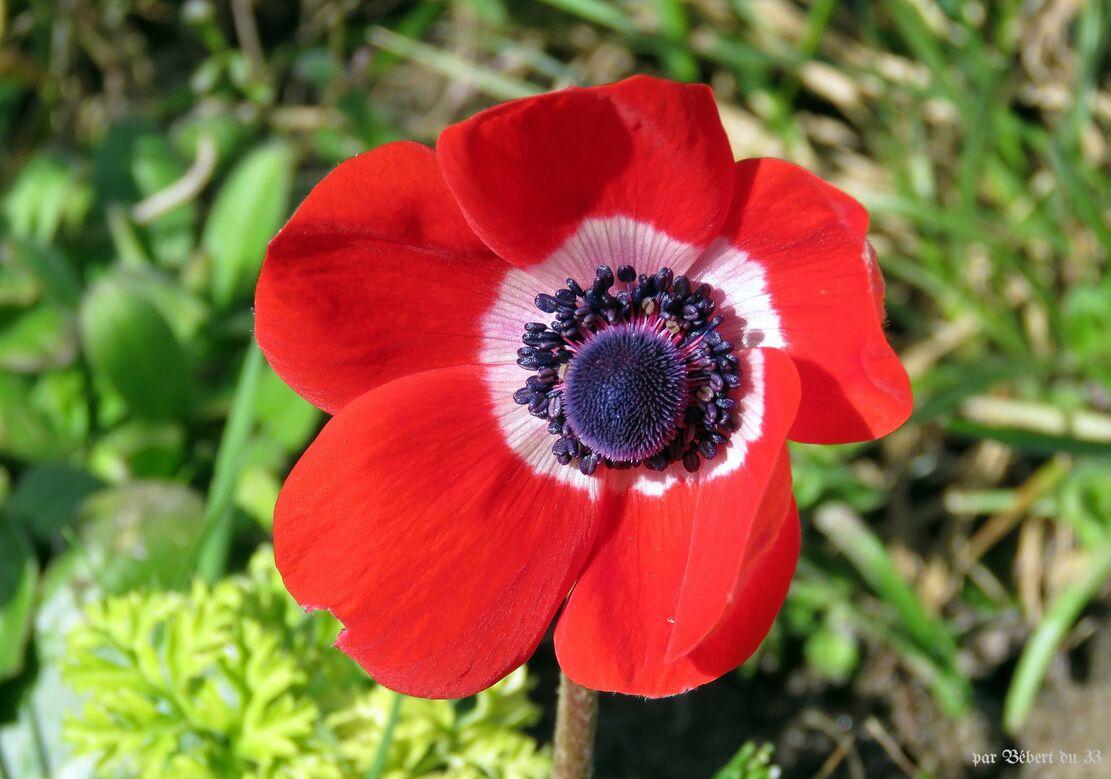fleurs du jardin - 2