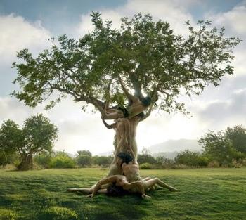arbre corps