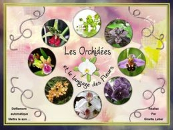 orchidees-ginette68
