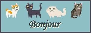 Cat Lovers 2