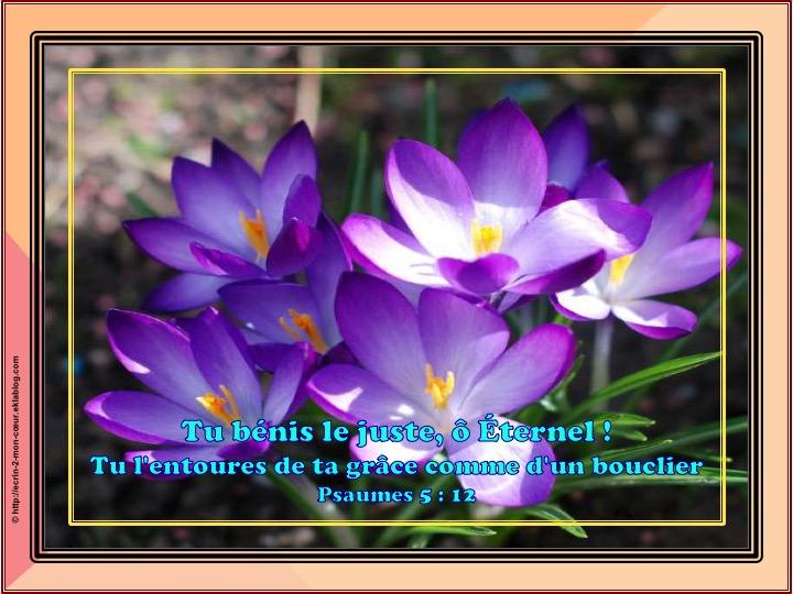 Tu bénis le juste - Psaumes 5 : 12