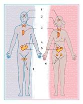 Système hormonal
