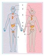 Glandes endocrines