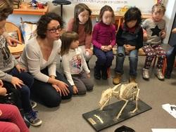 Les GS accueillent une vétérinaire