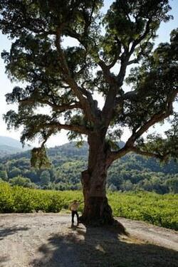 L'arbre de l'année 2013