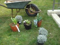 """Plantations de """"printemps"""""""