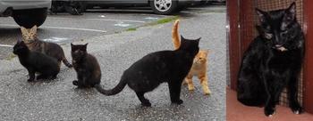 1ere chatte gestante 2014