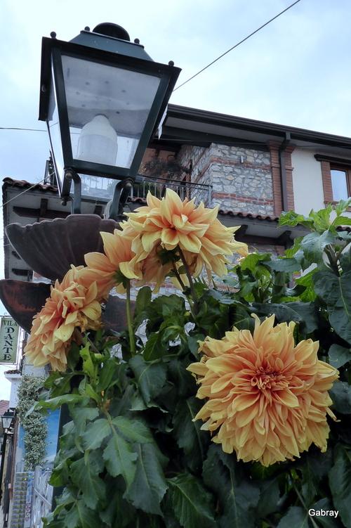 Des fleurs d'Albanie!