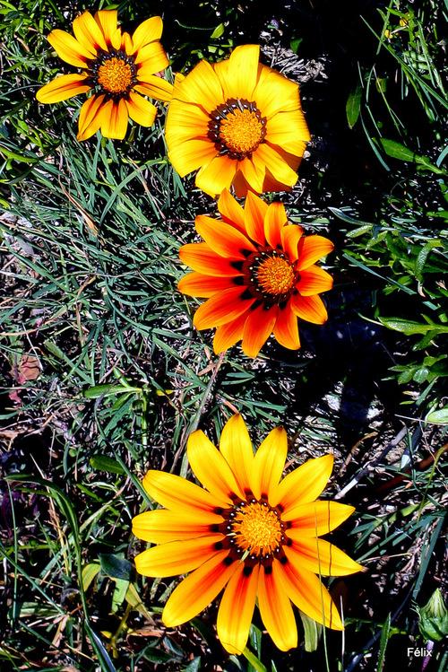 Des fleurs pour le printemps ...