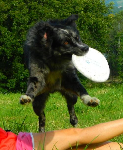 Frisbee, mon meilleur ami !