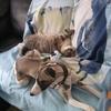 Féline et le chat 2.jpg