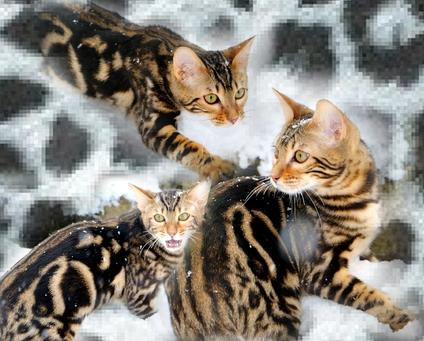 Timychatons8295753-bw-leopard-peau-arriere-plan-ou-la-texture-grande-resolution