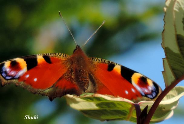 Papillons et autres petites bêtes...