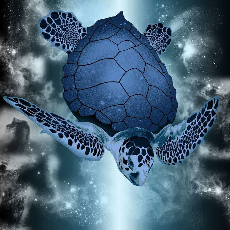 Cartes  Postales  TORTUES