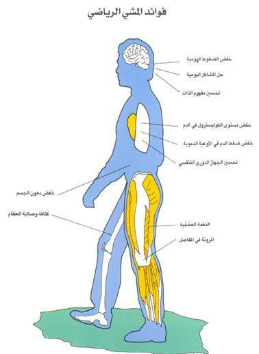 فوائد تحريك الذراعين أثناء المشي