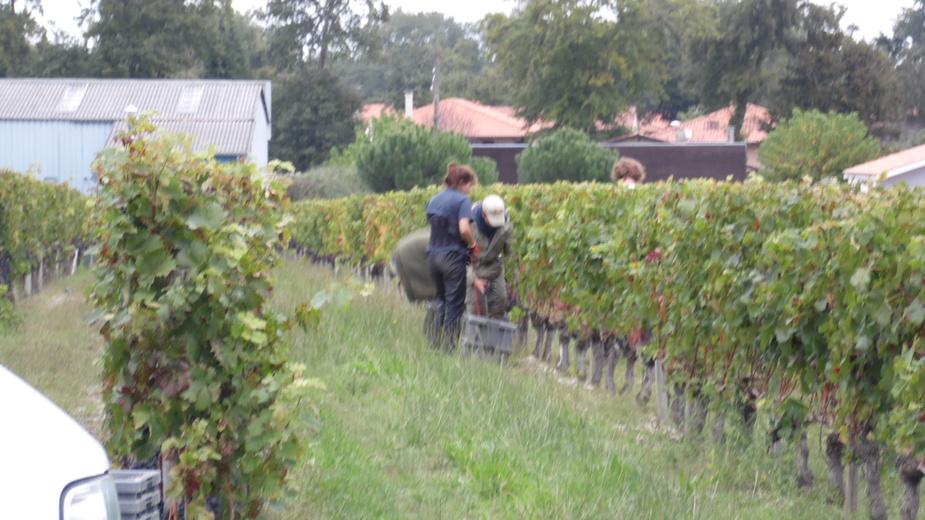 A la vigne !