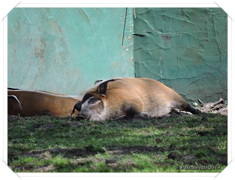 Zoo du Bassin d'Arcachon à La Teste de Buch - 4/20