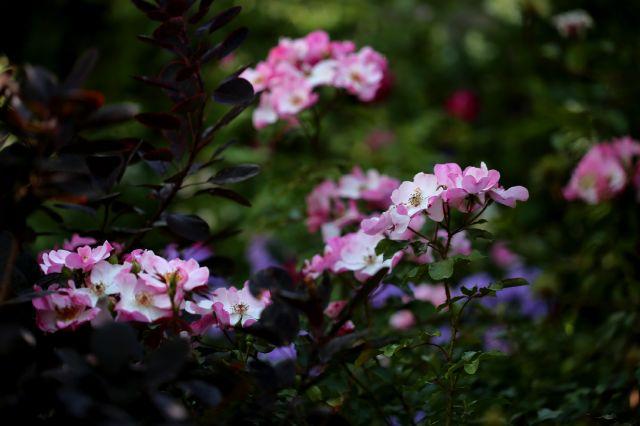 Le jardin comme exutoire (22)