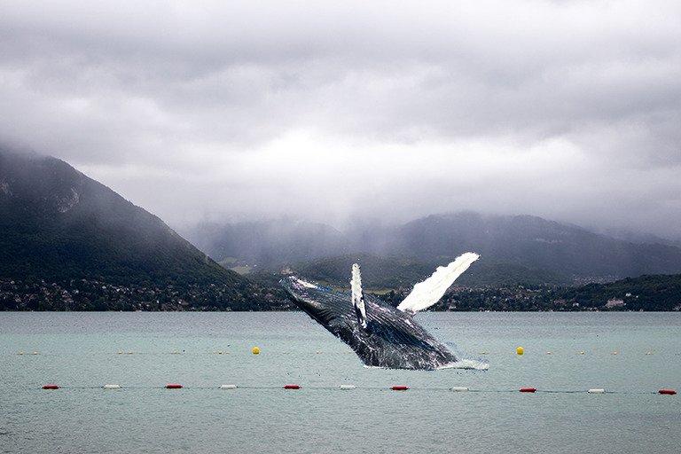 les baleines de retour dans le lac d'Annecy