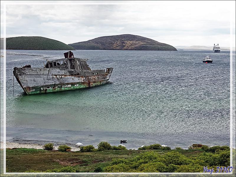 Dernier regard sur l'épave du Protector lll, triste vestige du passé meurtrier pour les mammifères marins - South Harbour - New Island - Falkland (Malvinas, Malouines) - Grande-Bretagne