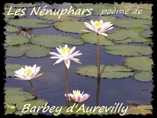 nenuphar-blanc-visoflora-17684