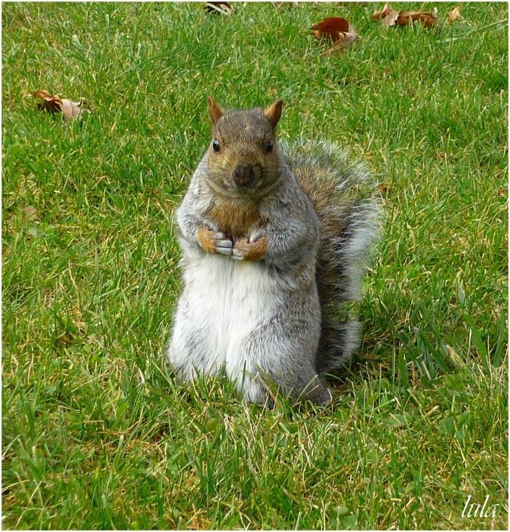 Les Ecureuils sont prêts pour affronter l'hiver ! (#2)
